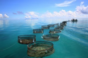 fishcages1.jpg