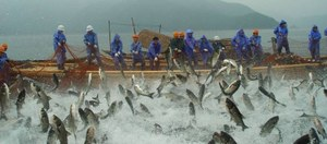 Fish cage harvest