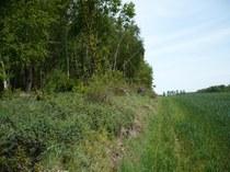 Bosfragmenten naast akkers bieden een habitat voor bijen en zweefvliegen.
