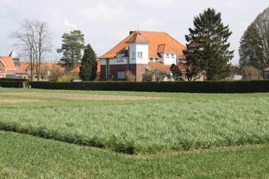 Proefveld met rietzwenkgras (vergrote weergave)