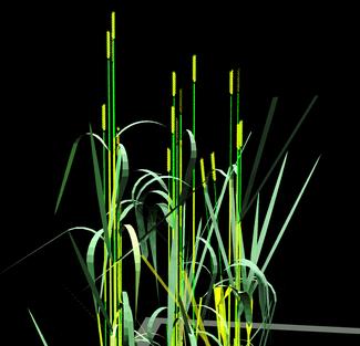 Tarwe in 3D