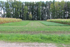mixed agro eco systems
