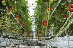 greenhouse-horticulture2.jpg