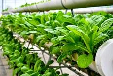 Urban Horticulture Innovation lab