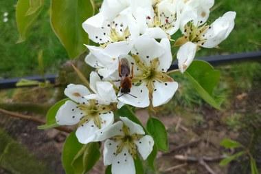 Wilde bijen 1444x963 (vergrote weergave)