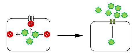 Crossing biological membranes
