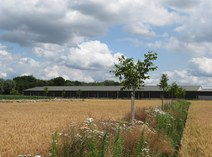 Arable agroforestry