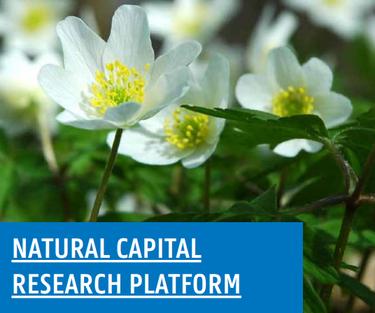 Natural Capital Platform