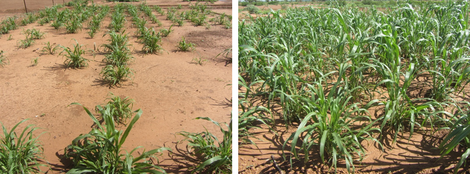 Building resilience against drought
