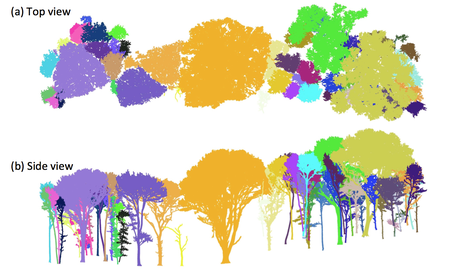 Scan trees