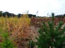 Tree diversity