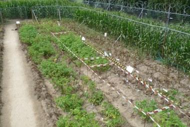aardappelveldproeven 1444x963.jpg (vergrote weergave)