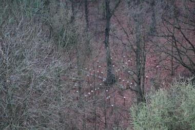 bosbeheer lucht 1444x963.jpg