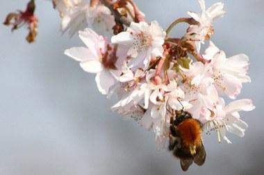 gezondheid bijen 1444x963.jpg