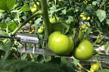 Tomaten 1444x963