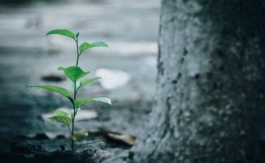 stikstof bossen plantensoorten (vergrote weergave)