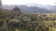 Rwenzori region