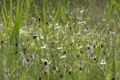 Heischraal grasland