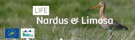 Nardus-Limosa.jpg