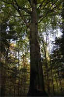 Picture Aelmoeseneieforest sfeerbeeld