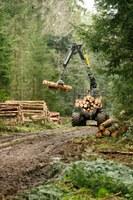 Picture Aelmoeseneieforest exploitatie 4