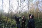 Picture Aelmoeseneieforest snoeicursus