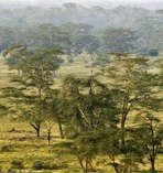 woodland kenia