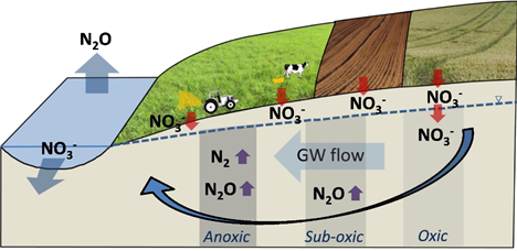 Attenuation of leached nitrate in anoxic parts of the groundwater aquifer and river