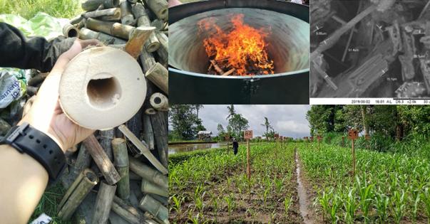 two and a half year old bamboo; 'flame curtain' (Kon-Tiki) method of pyrolysis; SEM image of bamboo biochar; field experiment with biochar application in Plaga village, Bali (UNUD)