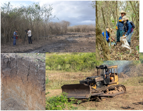 Marabú infestation on private farm; soil sampling in Marabú infested land; soil profile after > 20 years Marabú infestation; bulldozing of Marabú results in serious soil degradation