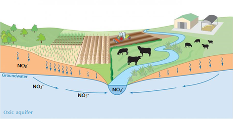Pathways of nitrate-rich baseflow in a catchment with an oxidized aquifer.