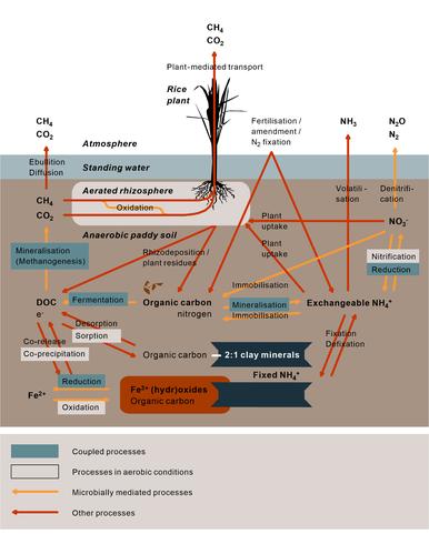 Scheme paddy soils