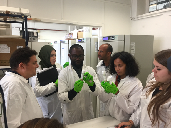 Demonstration of how pest insects are cultured in the laboratory