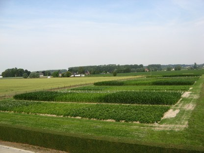 sustainable_crop_production_1.jpg