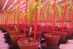 Wheat experiments with biostimulants