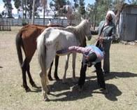 Horsetryps