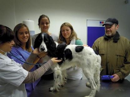 dierendispensarium kliniek