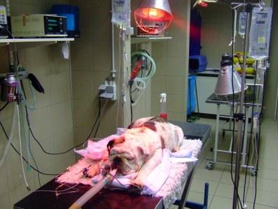 anesth-vakgebied-400