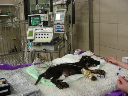 Hospitalisatie ICU