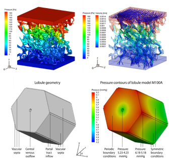 modelling_liver_perfusion3.png