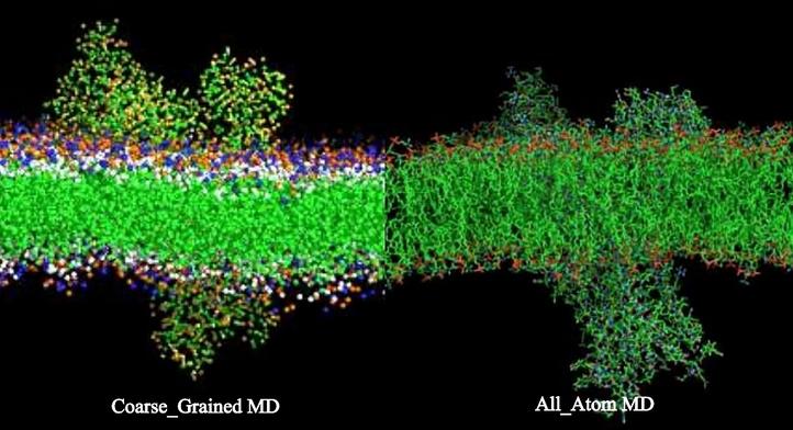 molecular-dynamics-simulations-membrane.png