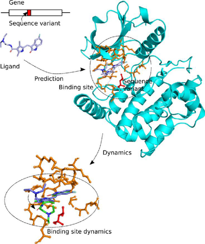 protein_binding_site.png