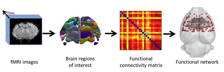 """figure 1: adapted from: Harris, N. G., et al. """"Disconnection and hyper-connectivity underlie reorganization after TBI: A rodent functional connectomic analysis."""" Experimental neurology 277 (2016): 124-138."""