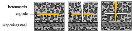 Schematic overview of the autonomous healing mechanism in concrete.