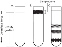Density Gradient ultracentrifugation LECR