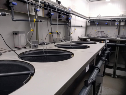 Proefopstelling voor het kweken van garnaallarven in het labo voor aquacultuur en ARC