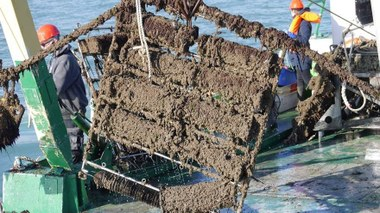 Ophalen frame (ontwerp van Brevisco en UGent) uit Westdiep-zone, 5 km voor de kust van Nieuwpoort.  foto: Annelies Declercq (vergrote weergave)