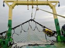Zeewiernetten in het Westdiep. Foto: Jessica Knoop