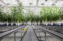 Plantenbiotechnologie