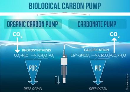 CarboOcean2